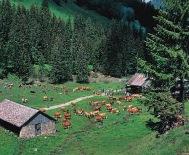 Швейцарский Гштаад