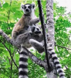 Путеводитель по Мадагаскару